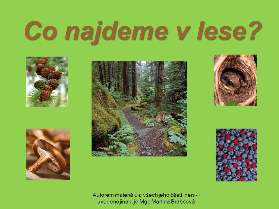 Autorem materiálu a všech jeho částí, není-li uvedeno jinak, je Mgr. Martina Brabcová Co najdeme v lese?