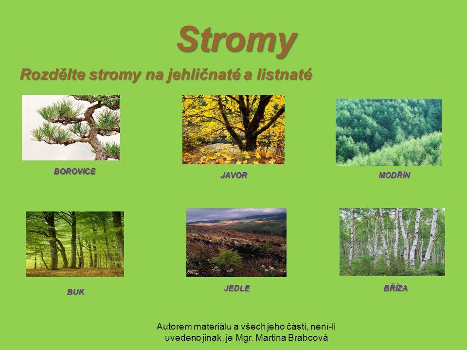 Autorem materiálu a všech jeho částí, není-li uvedeno jinak, je Mgr. Martina Brabcová Stromy Rozdělte stromy na jehličnaté a listnaté BOROVICE JEDLE B