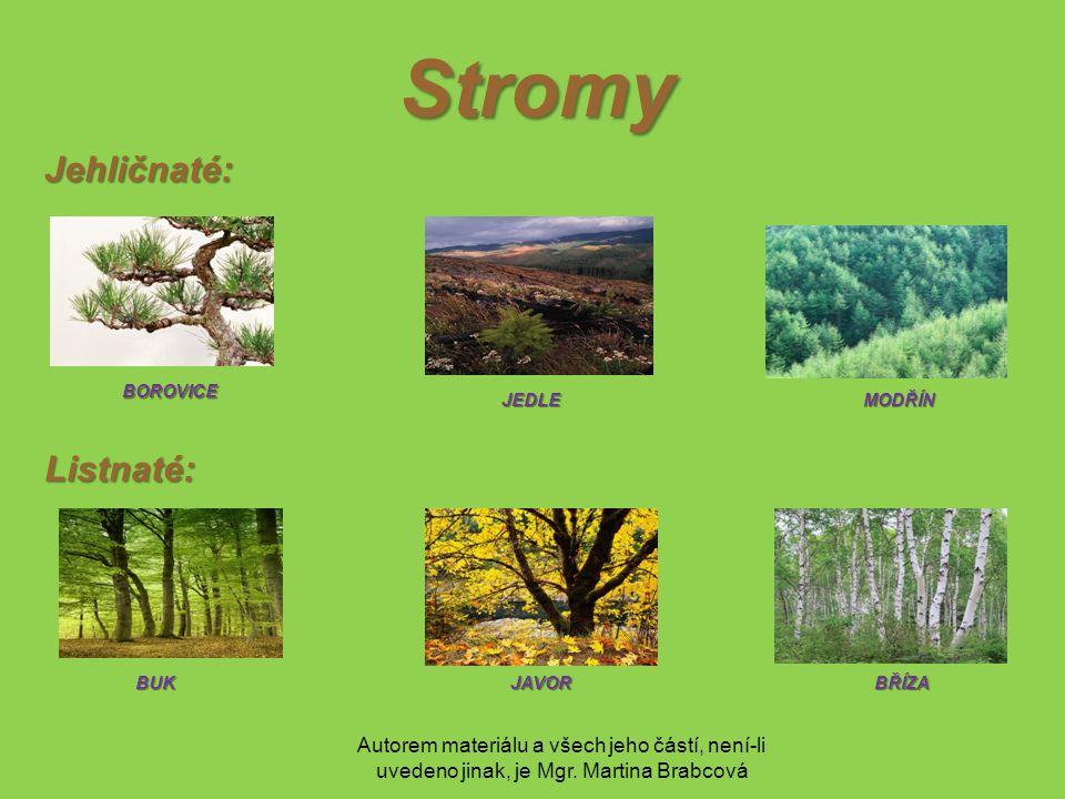 Autorem materiálu a všech jeho částí, není-li uvedeno jinak, je Mgr. Martina Brabcová Stromy Jehličnaté: BOROVICE JEDLE BUK MODŘÍN BŘÍZAJAVOR Listnaté