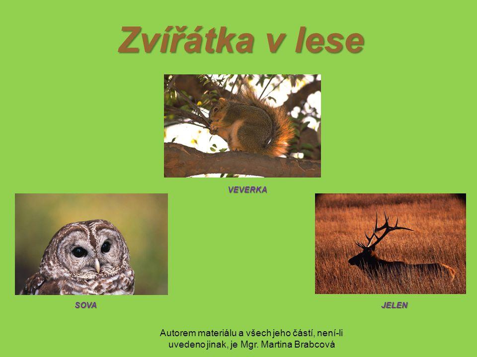 Autorem materiálu a všech jeho částí, není-li uvedeno jinak, je Mgr. Martina Brabcová Zvířátka v lese VEVERKA VEVERKA JELENSOVA