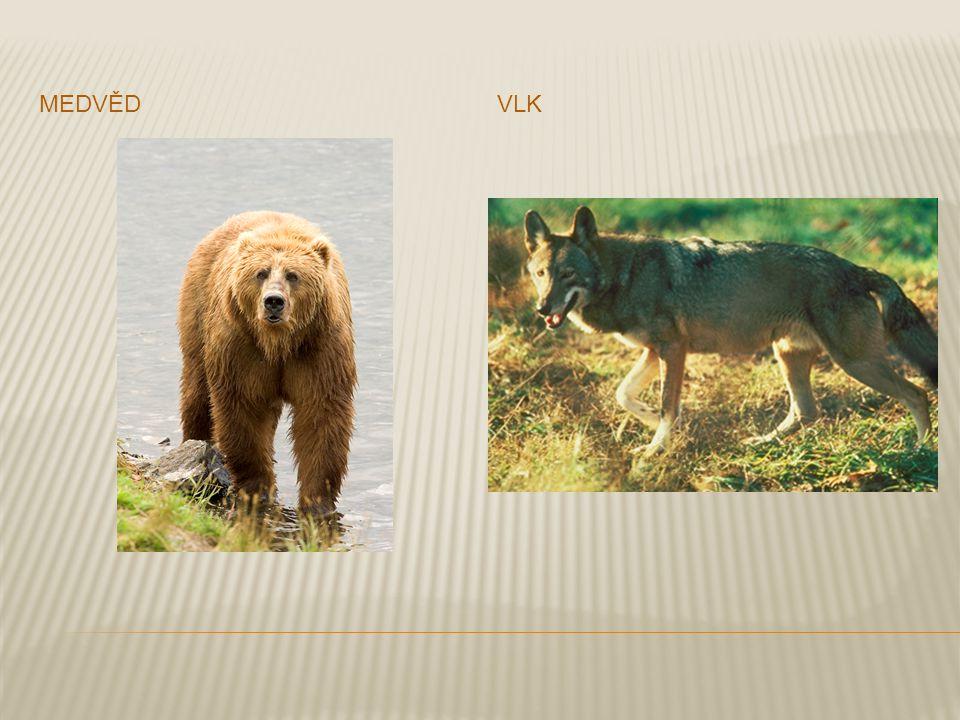  V mírnějších klimatech severozápadní Evropy jsou smíšené lesy tvořené dubem, jasanem a bukem a jsou domovem veverek, vysoké zvěře, divokých kanců a mnoha druhů ptáků.