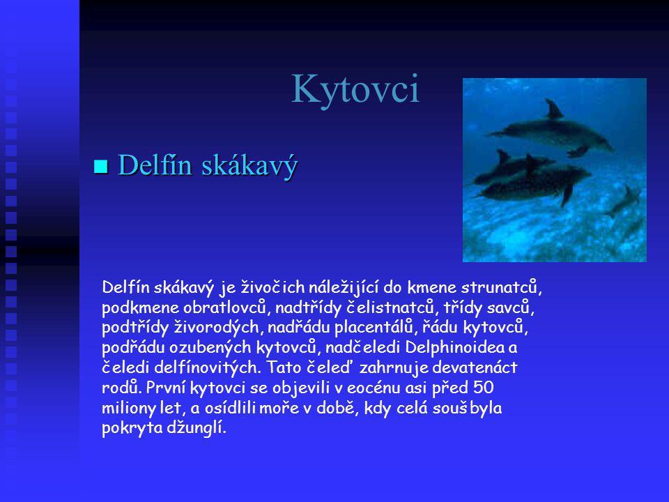 Kytovci  Delfín skákavý Delfín skákavý je živočich náležijící do kmene strunatců, podkmene obratlovců, nadtřídy čelistnatců, třídy savců, podtřídy živorodých, nadřádu placentálů, řádu kytovců, podřádu ozubených kytovců, nadčeledi Delphinoidea a čeledi delfínovitých.