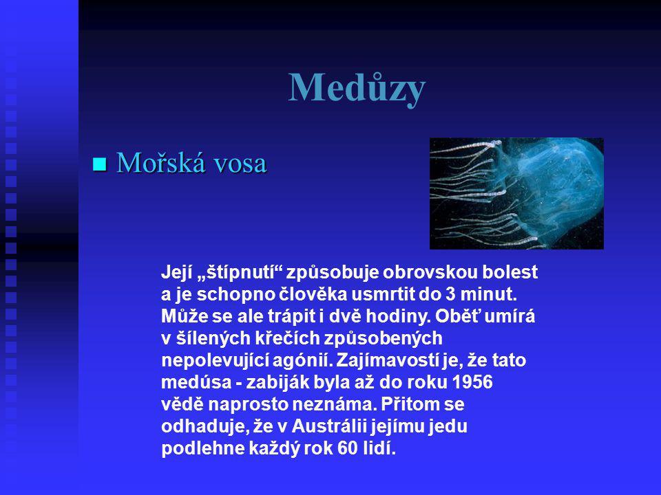 """Medůzy  Mořská vosa Její """"štípnutí způsobuje obrovskou bolest a je schopno člověka usmrtit do 3 minut."""