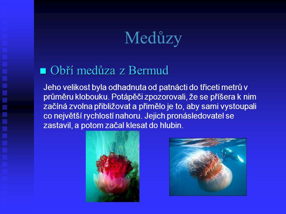 Medůzy  Obří  Obří medůza z Bermud Jeho velikost byla odhadnuta od patnácti do třiceti metrů v průměru klobouku.