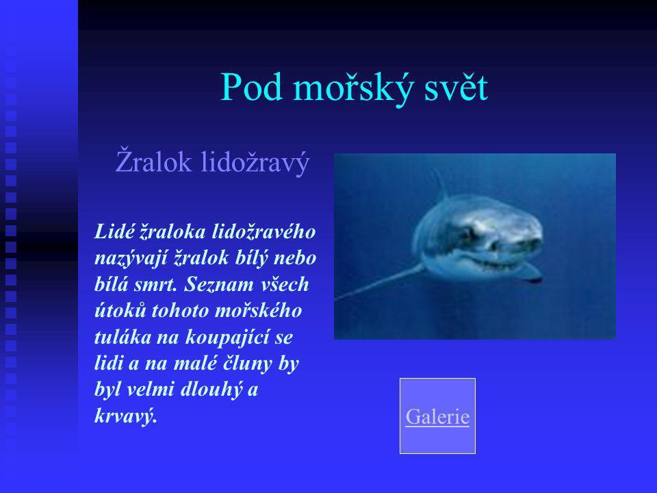 Pod mořský svět Žralok lidožravý Lidé žraloka lidožravého nazývají žralok bílý nebo bílá smrt.