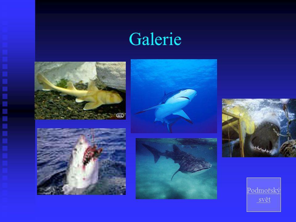 Galerie Podmořský svět