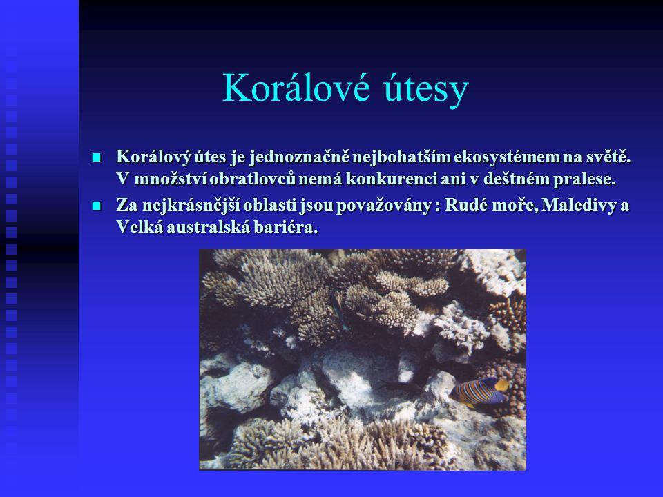 Korálové útesy  Korálový útes je jednoznačně nejbohatším ekosystémem na světě.