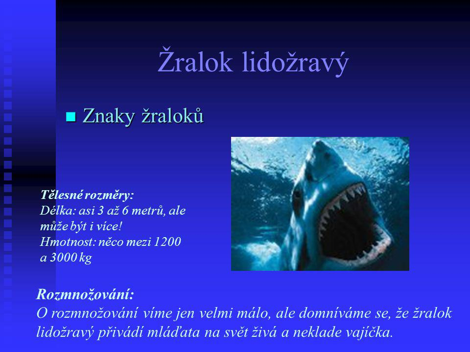 Žralok lidožravý  Znaky žraloků Tělesné rozměry: Délka: asi 3 až 6 metrů, ale může být i více.