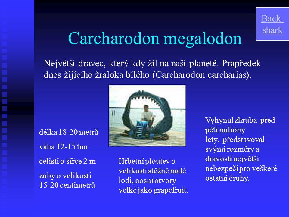 Carcharodon megalodon Největší dravec, který kdy žil na naší planetě.