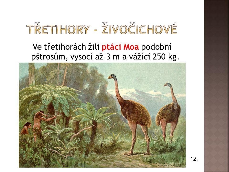 Ve třetihorách žili ptáci Moa podobní pštrosům, vysocí až 3 m a vážící 250 kg. 12.