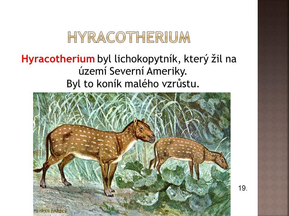 Hyracotherium byl lichokopytník, který žil na území Severní Ameriky. Byl to koník malého vzrůstu. 19.