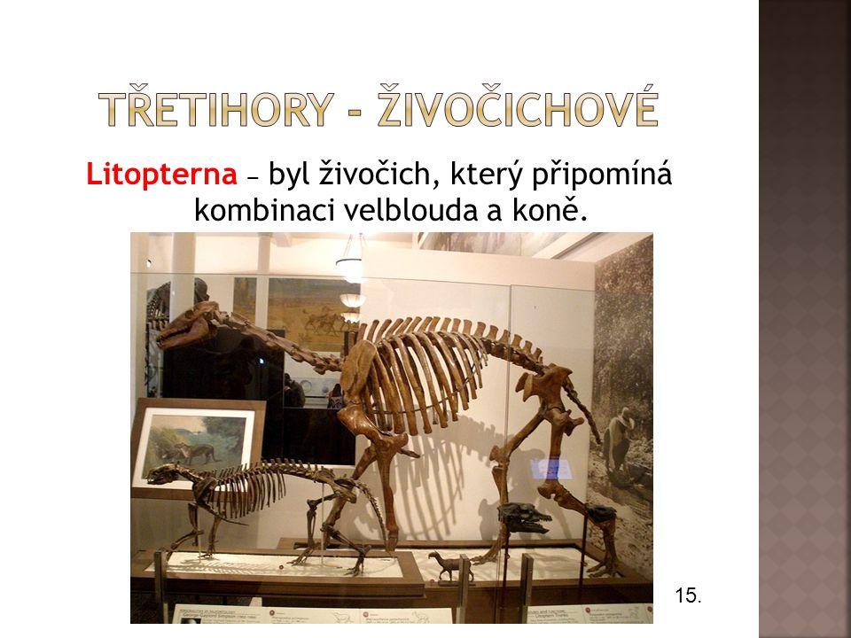 Litopterna ‒ byl živočich, který připomíná kombinaci velblouda a koně. 15.