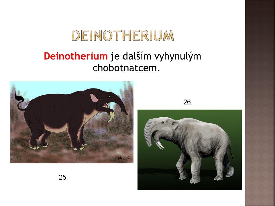 Deinotherium je dalším vyhynulým chobotnatcem. 25. 26.