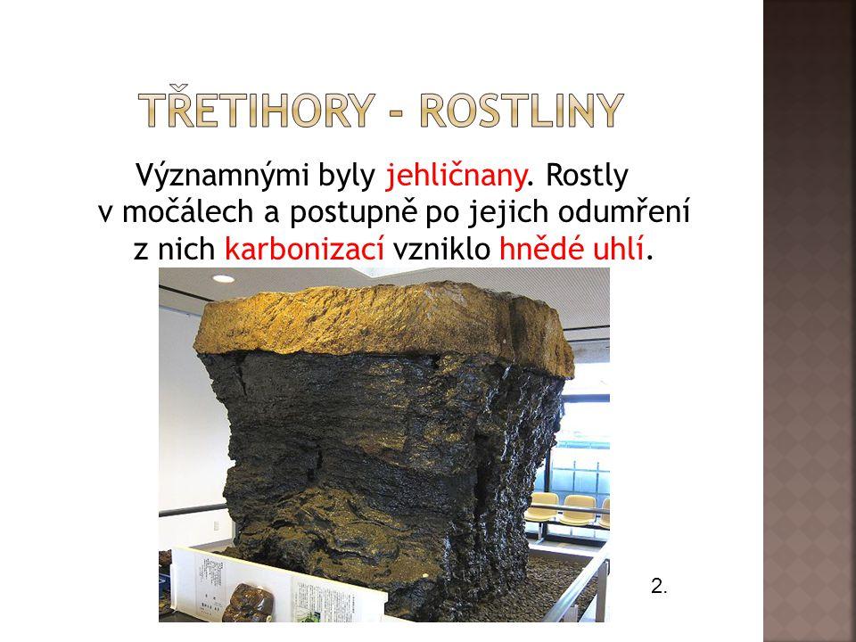 Významnými byly jehličnany. Rostly v močálech a postupně po jejich odumření z nich karbonizací vzniklo hnědé uhlí. 2.