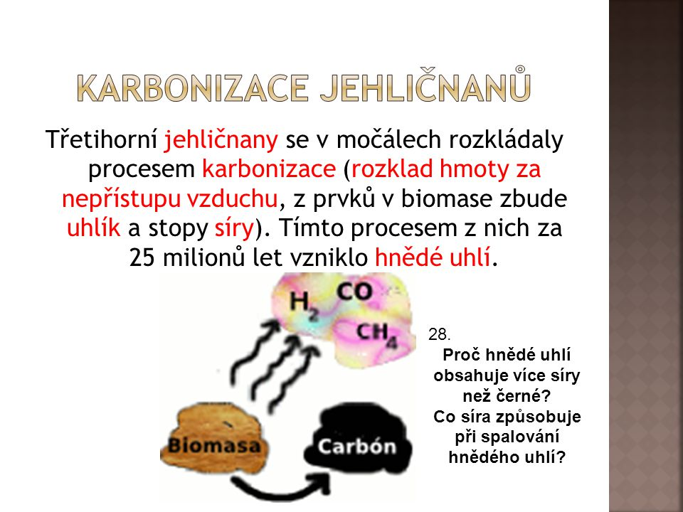 Třetihorní jehličnany se v močálech rozkládaly procesem karbonizace (rozklad hmoty za nepřístupu vzduchu, z prvků v biomase zbude uhlík a stopy síry).