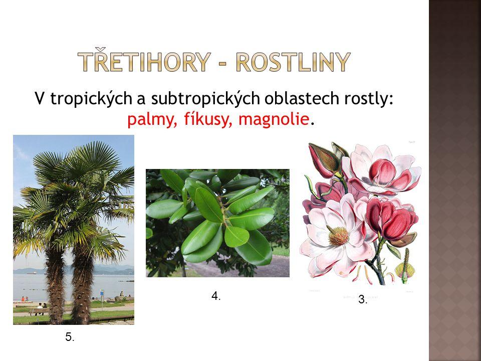 V tropických a subtropických oblastech rostly: palmy, fíkusy, magnolie. 3. 4. 5.