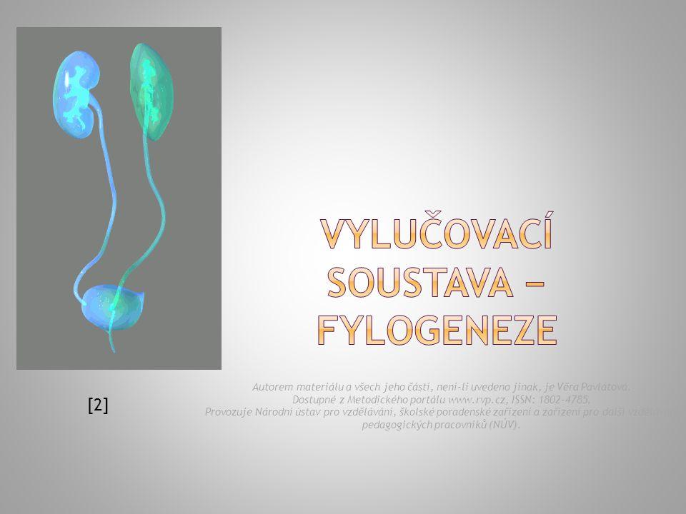  segmentárně (až 90 párů) uspořádané vylučovací orgány (cyrtopodocyty) značně podobné solenocytům či metanefridiím.