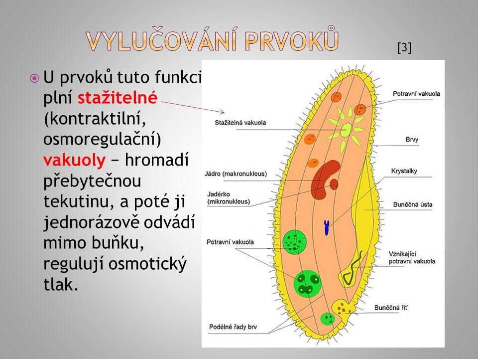  holonefros - dělené ledviny, např.u larev mihulí  pronefros - částečně dělené,např.