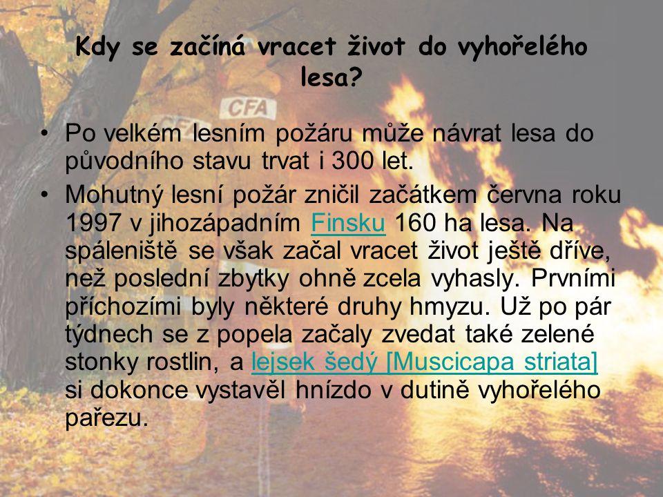 Kdy se začíná vracet život do vyhořelého lesa? •Po velkém lesním požáru může návrat lesa do původního stavu trvat i 300 let. •Mohutný lesní požár znič