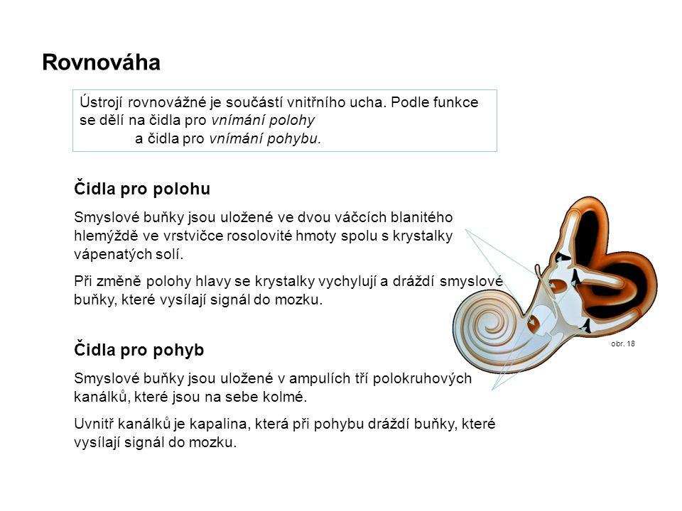 obr. 18 Rovnováha Ústrojí rovnovážné je součástí vnitřního ucha. Podle funkce se dělí na čidla pro vnímání polohy a čidla pro vnímání pohybu. Čidla pr