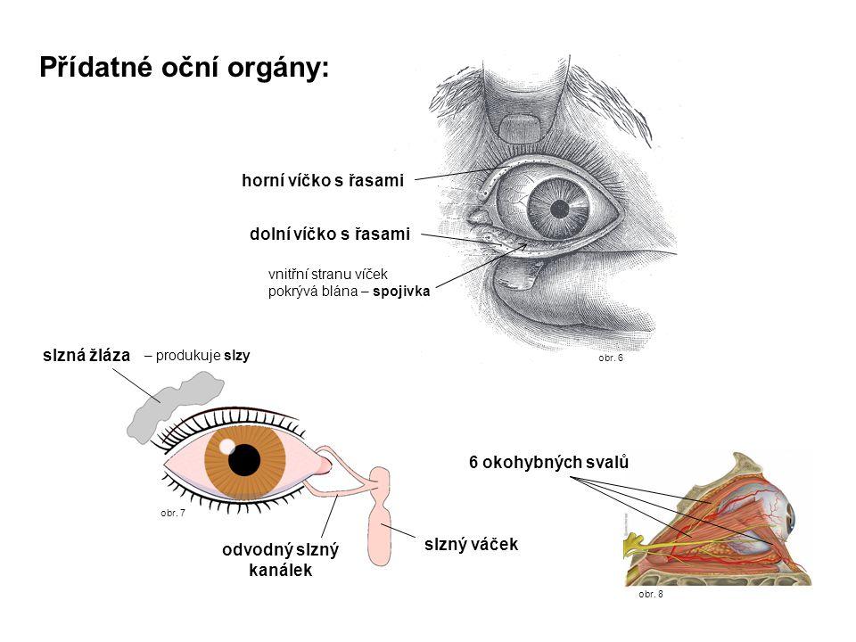 obr. 6 obr. 8 obr. 7 Přídatné oční orgány: 6 okohybných svalů slzná žláza odvodný slzný kanálek horní víčko s řasami dolní víčko s řasami vnitřní stra