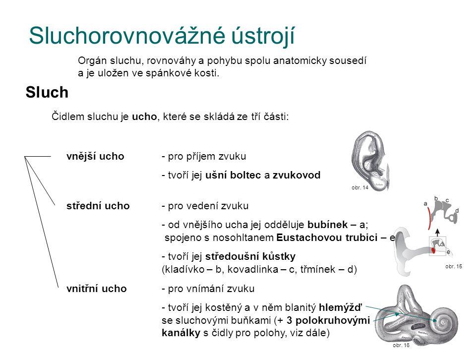 obr. 15 e Sluchorovnovážné ústrojí Orgán sluchu, rovnováhy a pohybu spolu anatomicky sousedí a je uložen ve spánkové kosti. Sluch Čidlem sluchu je uch