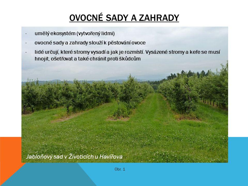 OVOCNÉ SADY A ZAHRADY -umělý ekosystém (vytvořený lidmi) -ovocné sady a zahrady slouží k pěstování ovoce -lidé určují, které stromy vysadí a jak je ro