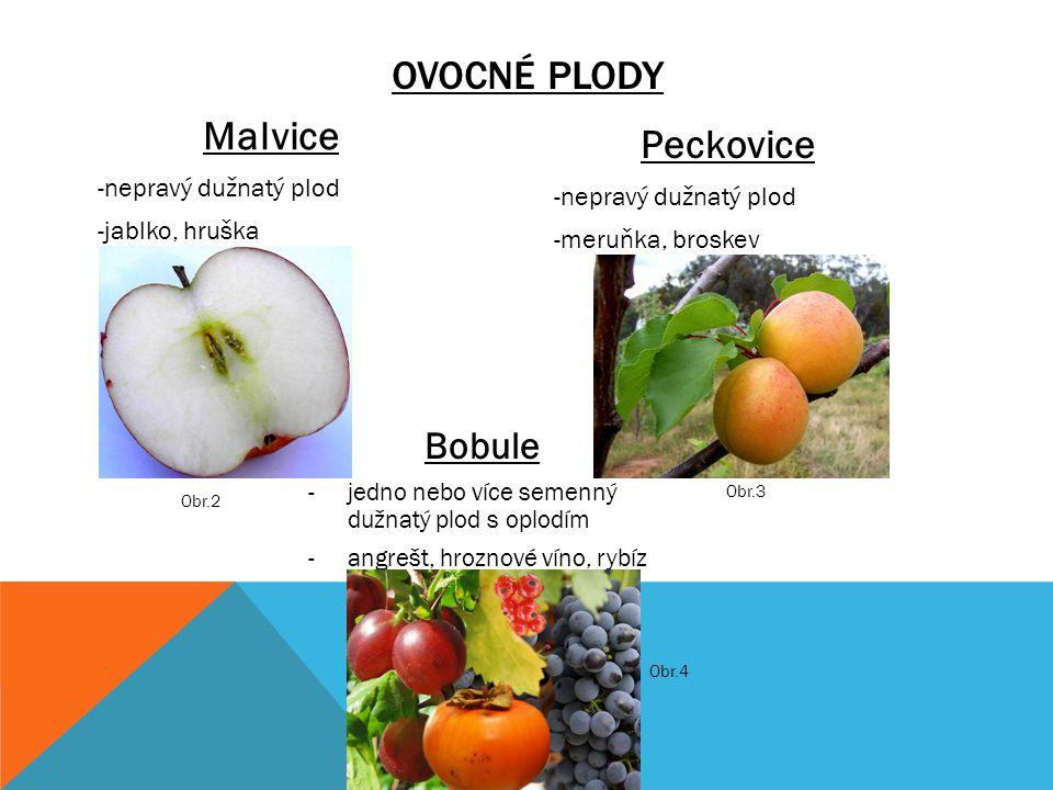 OVOCNÉ PLODY Malvice -nepravý dužnatý plod -jablko, hruška Peckovice -nepravý dužnatý plod -meruňka, broskev Bobule -jedno nebo více semenný dužnatý p