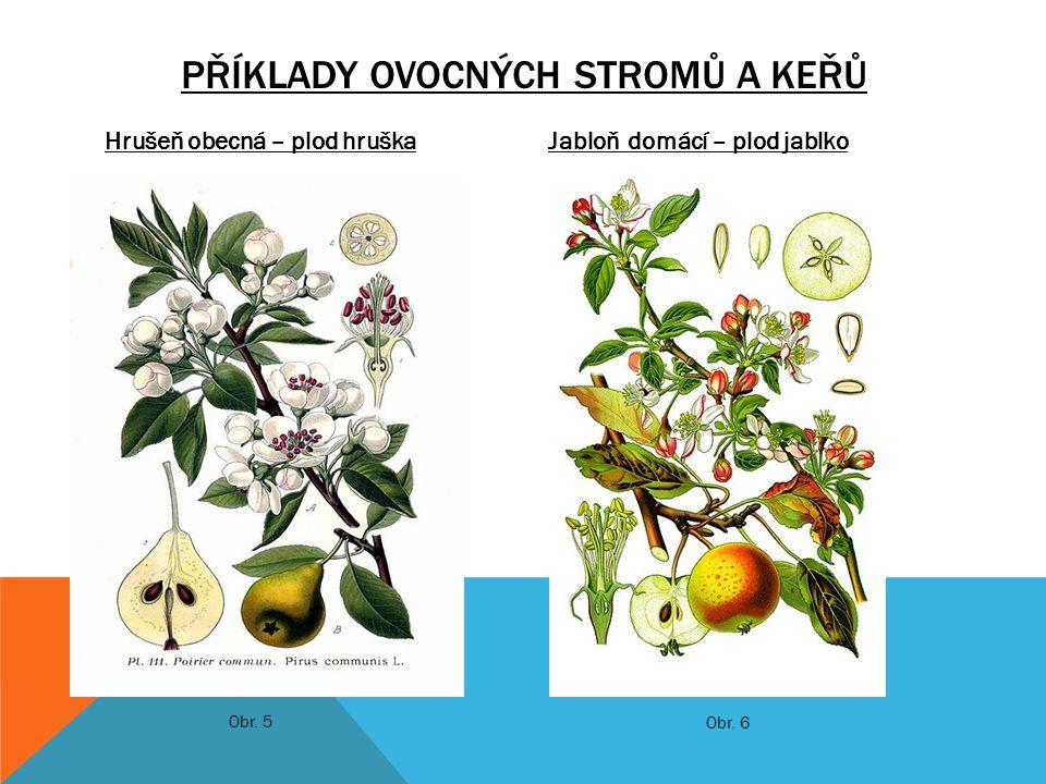Hrušeň obecná – plod hruškaJabloň domácí – plod jablko PŘÍKLADY OVOCNÝCH STROMŮ A KEŘŮ Obr. 5 Obr. 6