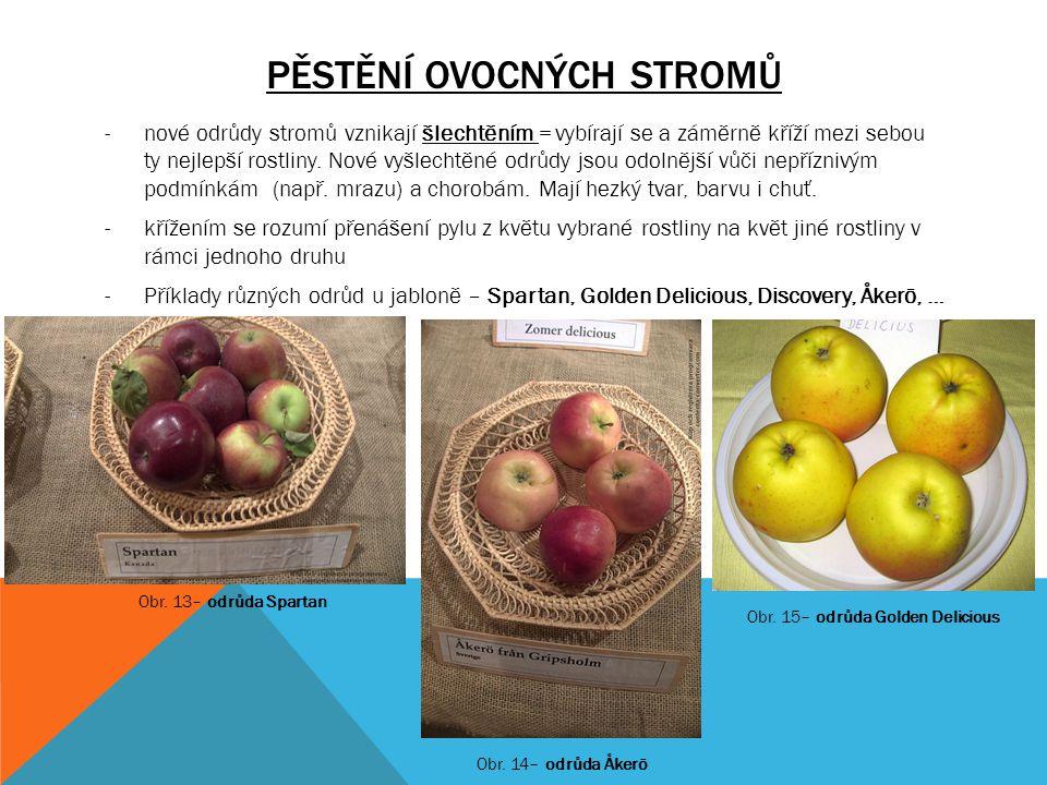 PĚSTĚNÍ OVOCNÝCH STROMŮ -nové odrůdy stromů vznikají šlechtěním = vybírají se a záměrně kříží mezi sebou ty nejlepší rostliny. Nové vyšlechtěné odrůdy