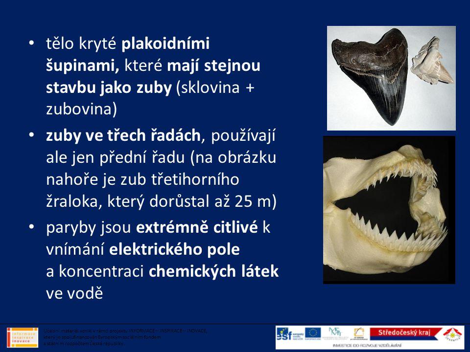 • tělo kryté plakoidními šupinami, které mají stejnou stavbu jako zuby (sklovina + zubovina) • zuby ve třech řadách, používají ale jen přední řadu (na