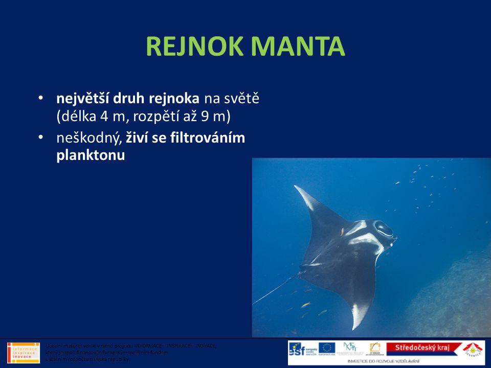 REJNOK MANTA • největší druh rejnoka na světě (délka 4 m, rozpětí až 9 m) • neškodný, živí se filtrováním planktonu Učební materiál vznikl v rámci pro