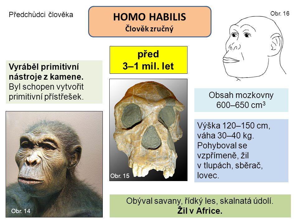HOMO HABILIS Člověk zručný Předchůdci člověka před 3–1 mil. let Obsah mozkovny 600–650 cm 3 Vyráběl primitivní nástroje z kamene. Byl schopen vytvořit