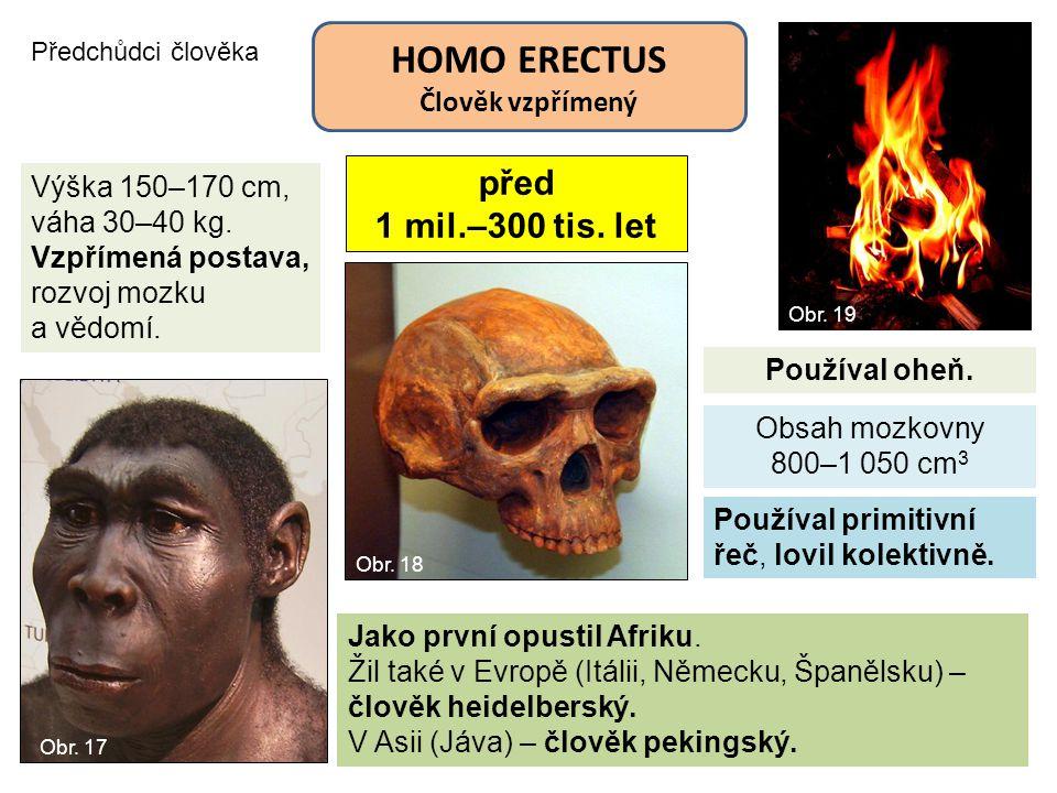Předchůdci člověka HOMO ERECTUS Člověk vzpřímený před 1 mil.–300 tis. let Obsah mozkovny 800–1 050 cm 3 Výška 150–170 cm, váha 30–40 kg. Vzpřímená pos