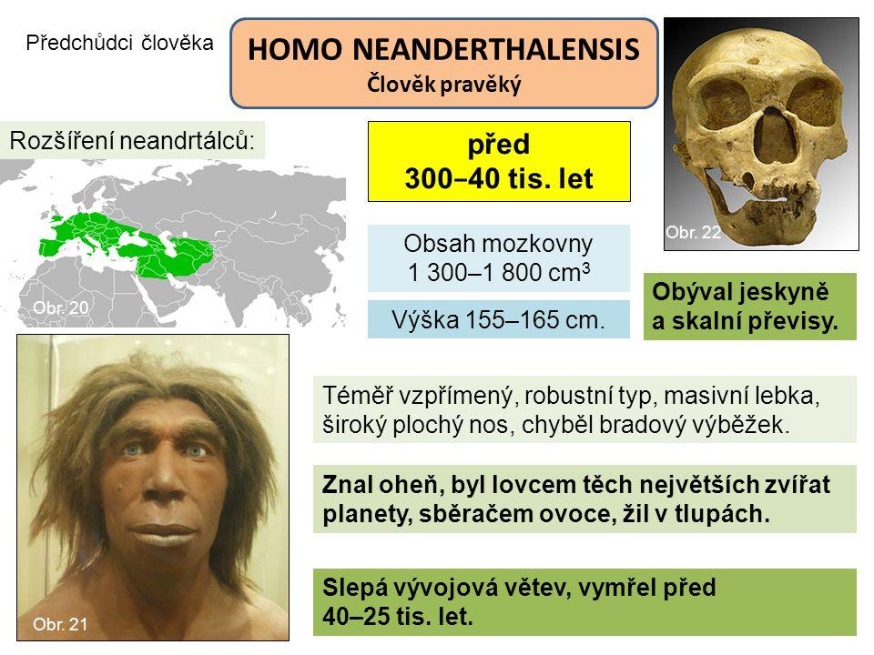 Předchůdci člověka HOMO NEANDERTHALENSIS Člověk pravěký Obsah mozkovny 1 300–1 800 cm 3 Slepá vývojová větev, vymřel před 40–25 tis. let. Rozšíření ne