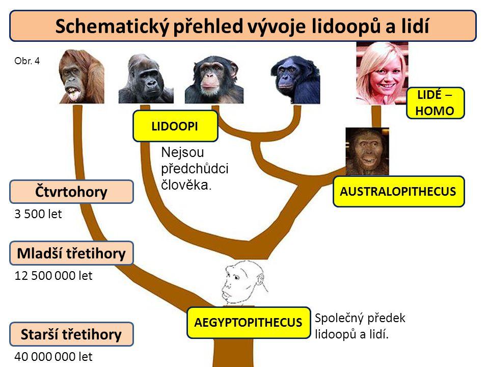 AEGYPTOPITHECUS AUSTRALOPITHECUS LIDÉ ‒ HOMO LIDOOPI Společný předek lidoopů a lidí. Starší třetihory Mladší třetihory Čtvrtohory 40 000 000 let 12 50