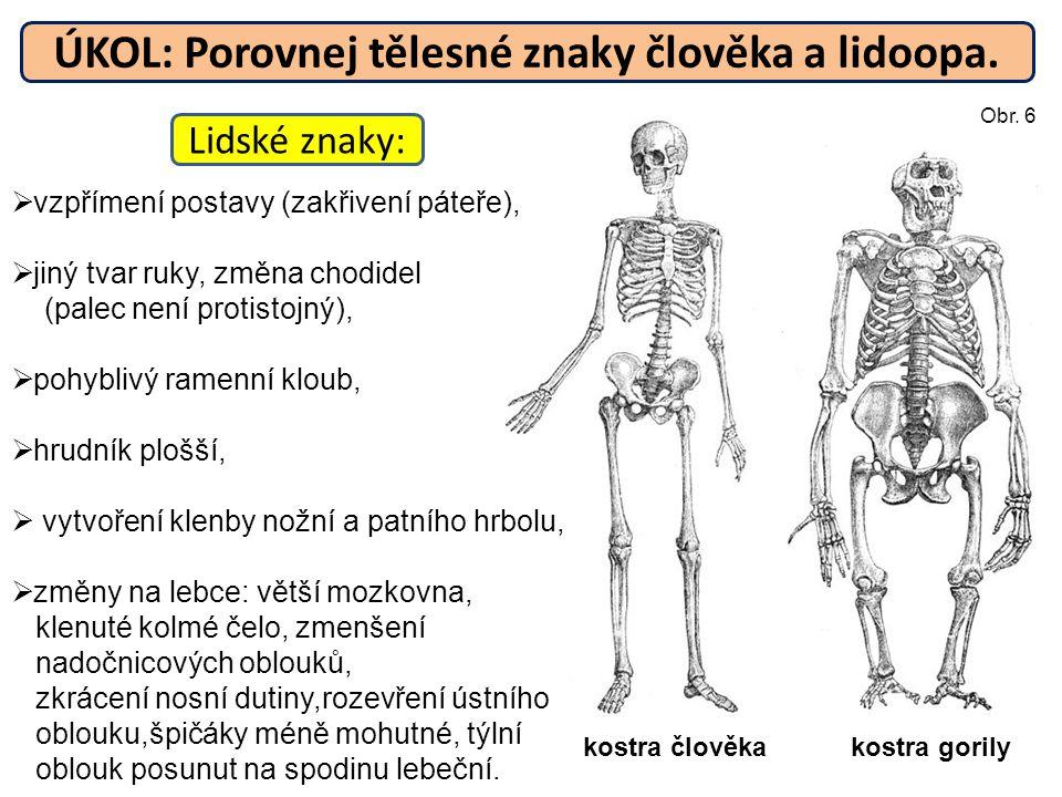 ÚKOL: Porovnej tělesné znaky člověka a lidoopa.  vzpřímení postavy (zakřivení páteře),  jiný tvar ruky, změna chodidel (palec není protistojný),  p