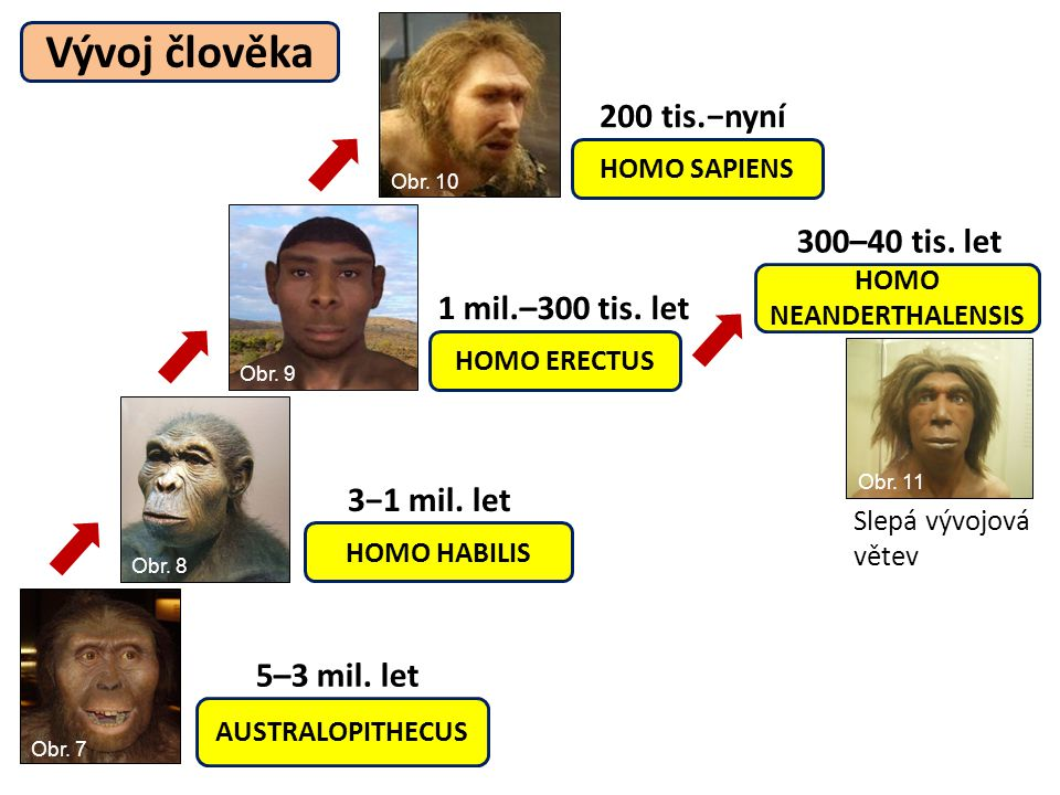 HOMO HABILIS HOMO SAPIENS HOMO ERECTUS HOMO NEANDERTHALENSIS AUSTRALOPITHECUS 5–3 mil. let 200 tis.−nyní 1 mil.–300 tis. let 3−1 mil. let 300–40 tis.