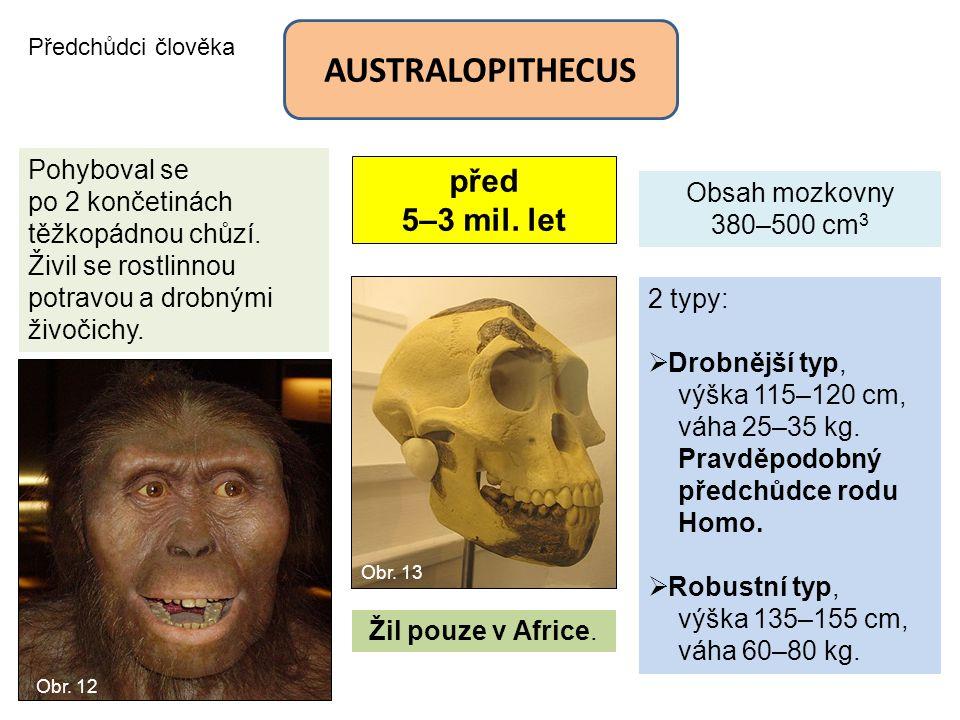 Předchůdci člověka AUSTRALOPITHECUS před 5–3 mil. let Obsah mozkovny 380–500 cm 3 2 typy:  Drobnější typ, výška 115–120 cm, váha 25–35 kg. Pravděpodo