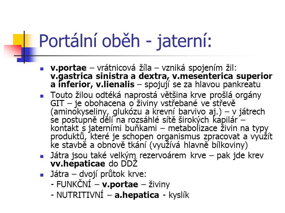 Portální oběh - jaterní:  v.portae – vrátnicová žíla – vzniká spojením žil: v.gastrica sinistra a dextra, v.mesenterica superior a inferior, v.lienal