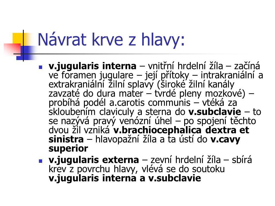 v.cava inferior  Krev z DK – vv.iliacae communes  Krev z orgánů dutiny břišní: - vv.testiculares (ovaricae) – z varlat, vaječníků - vv.renales – z ledvin - vv.suprarenales – z nadledvin - vv.hepaticae – z jater  DDŽ se ve svém průběhu od aorty postupně vzdaluje doprava, klade se pod játra a jde přes bránici do PS
