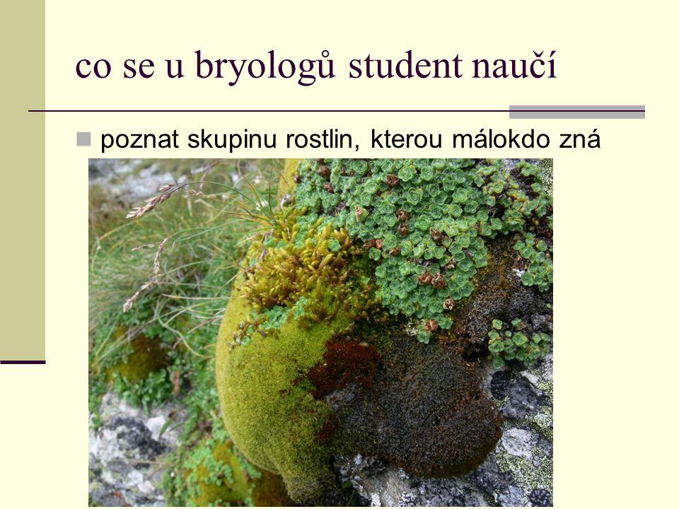 co se u bryologů student naučí  poznat skupinu rostlin, kterou málokdo zná