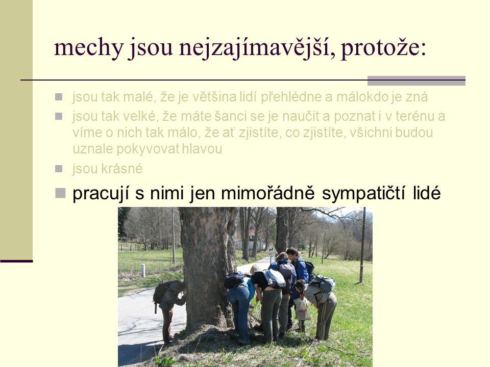 bryotým na Katedře botaniky šéfstvo doktorandi studenti HonzaTáňa JirkaEvčaBetyEliška JitkaVerča