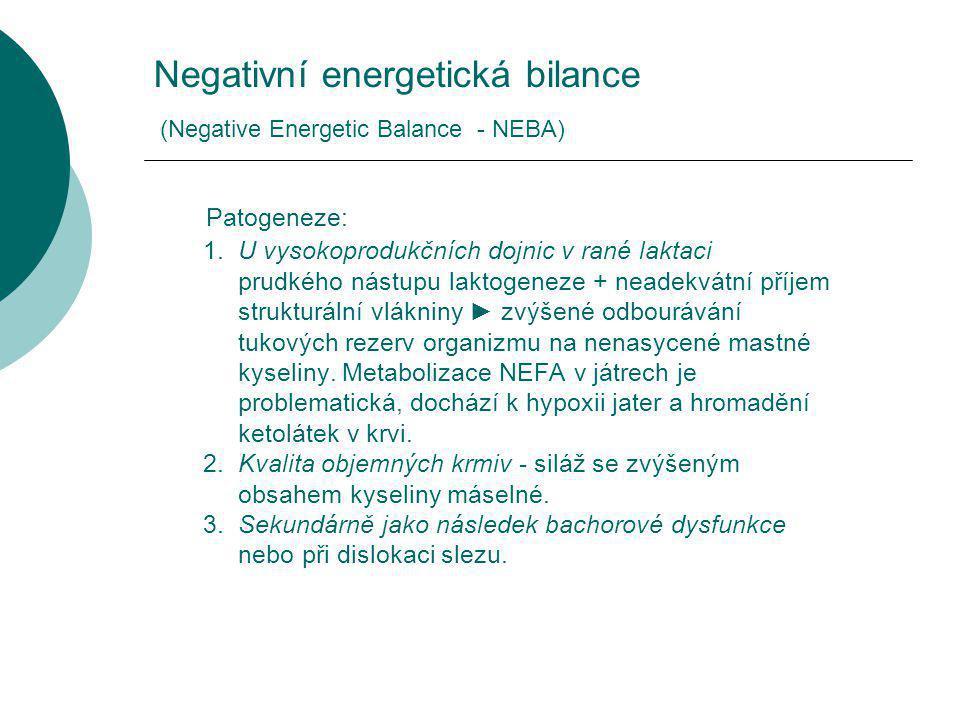 Negativní energetická bilance (Negative Energetic Balance - NEBA) Patogeneze: 1.