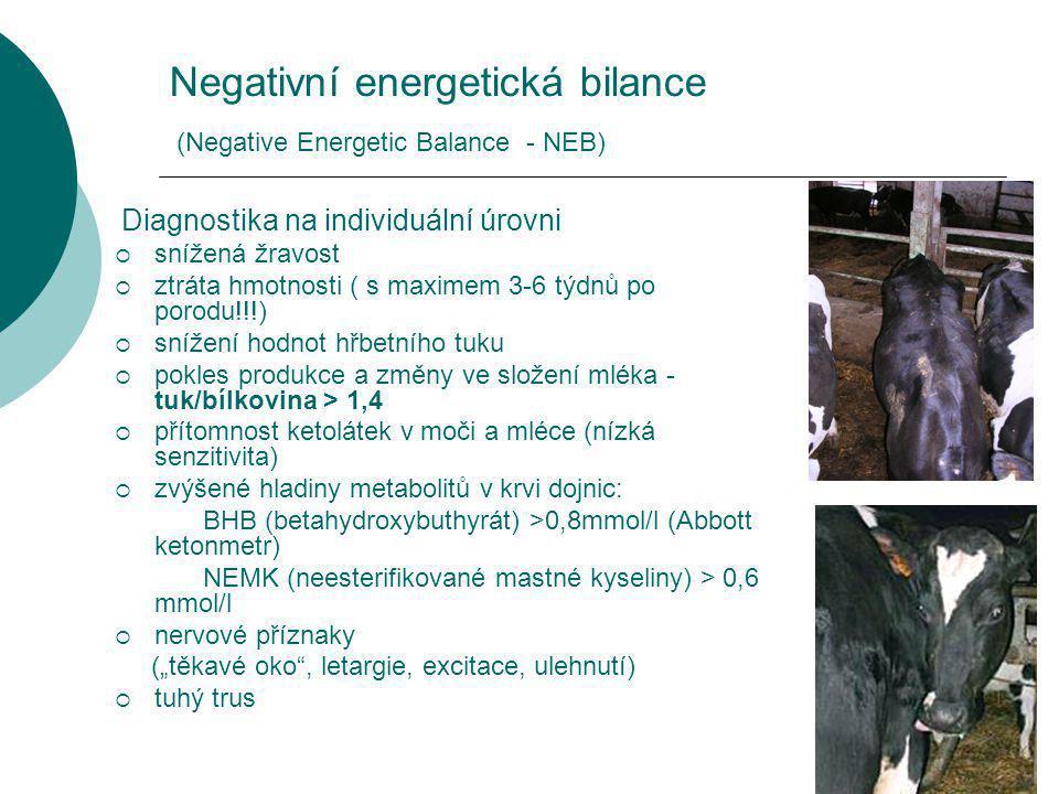 """Negativní energetická bilance (Negative Energetic Balance - NEB) Diagnostika na individuální úrovni  snížená žravost  ztráta hmotnosti ( s maximem 3-6 týdnů po porodu!!!)  snížení hodnot hřbetního tuku  pokles produkce a změny ve složení mléka - tuk/bílkovina > 1,4  přítomnost ketolátek v moči a mléce (nízká senzitivita)  zvýšené hladiny metabolitů v krvi dojnic: BHB (betahydroxybuthyrát) >0,8mmol/l (Abbott ketonmetr) NEMK (neesterifikované mastné kyseliny) > 0,6 mmol/l  nervové příznaky (""""těkavé oko , letargie, excitace, ulehnutí)  tuhý trus"""