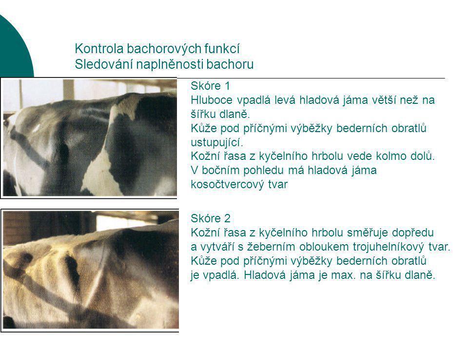 Kontrola bachorových funkcí Sledování naplněnosti bachoru Skóre 3 Kožní řasa z kyčelního hrbolu je neznatelná, hladová jáma je znatelná.