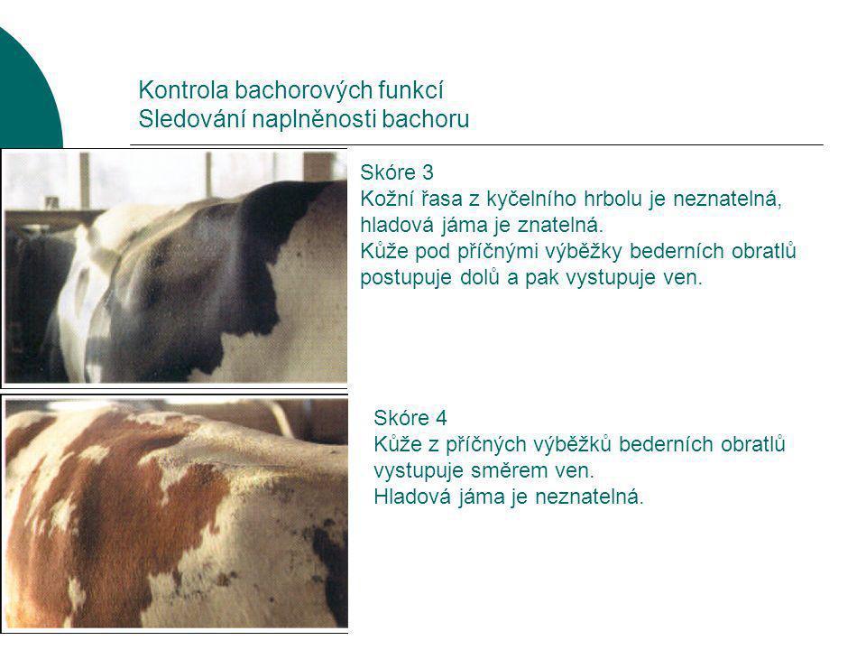 Kontrola bachorových funkcí Sledování naplněnosti bachoru Skóre 5 Kůže naplá, bez rozlišení hladové jámy a žeber.