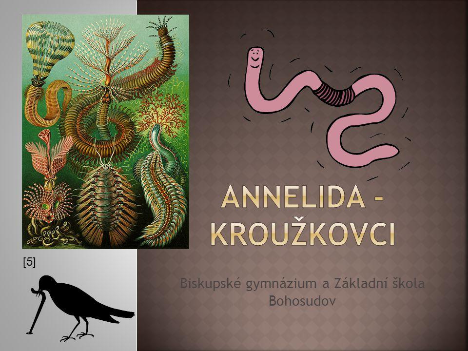 [27][28] 1 - nervová destička (ganglium) 2 - apikální svazek brv 3 - prototroch (věnec brv) 4 - paratroch (věnec brv) 5 – coelom 6 - řitní otvor 7 - metanefridie 8 - žaludek 9 - ústní otvor plovoucí obrvená larva přilbovitého tvaru