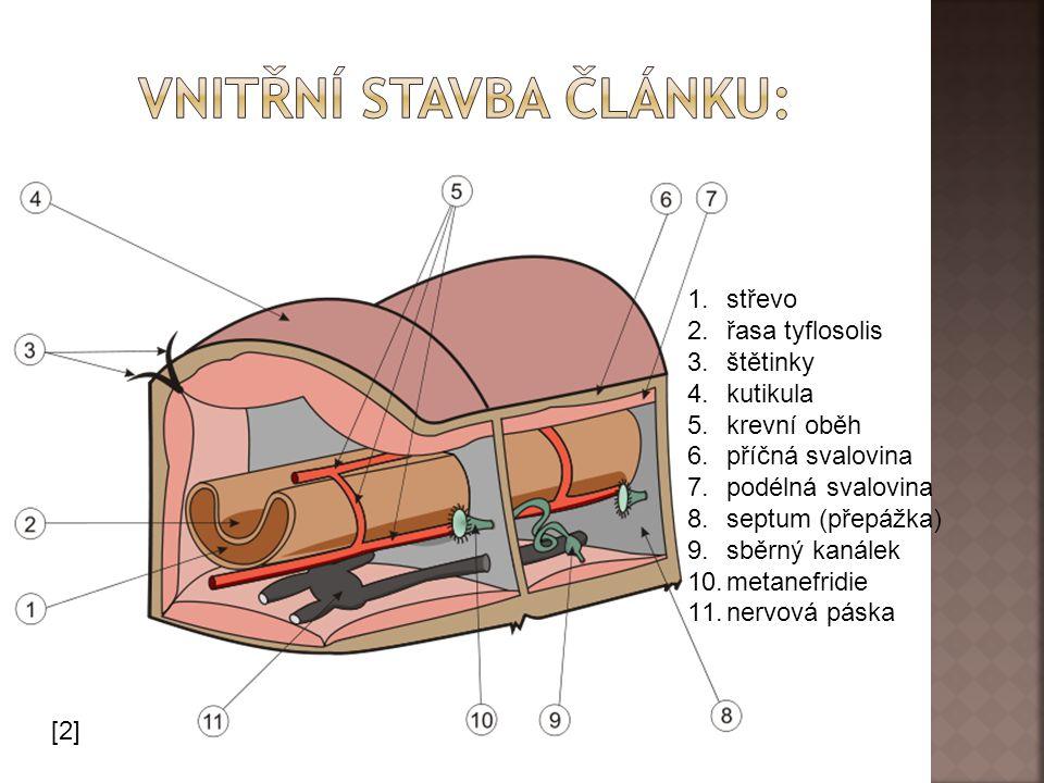 [2] 1.střevo 2.řasa tyflosolis 3.štětinky 4.kutikula 5.krevní oběh 6.příčná svalovina 7.podélná svalovina 8.septum (přepážka) 9.sběrný kanálek 10.metanefridie 11.nervová páska