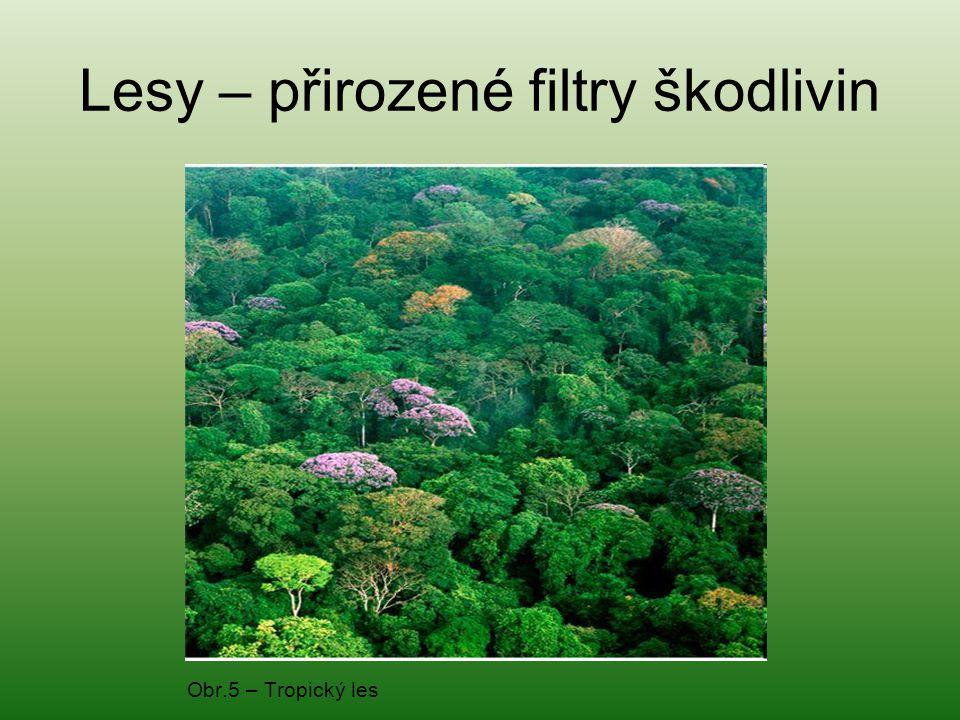 Obr.6 - Rozložení tropických lesů na Zemi